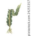 다시마, 바닷말, 해조 24255357