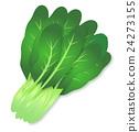 소송 채 십자화과 녹황색 채소 귀여운 일러스트 24273155