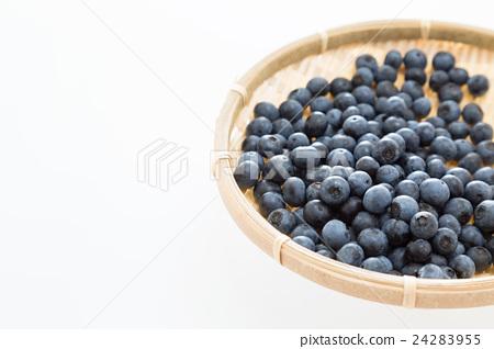 Blueberry White Back 24283955