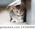 little cute kitten  siting  outdoors 24306968