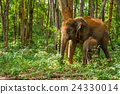 Elephant and its calf 24330014