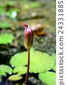 식물 24331885