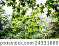 식물 24331889