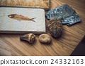 化石 桌子上 桌面 24332163