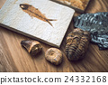 化石 鸚鵡螺化石 研究 24332168