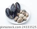 white background, baby-neck clam, blue mussel 24333525