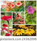 various flowers collage 24362096