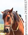 horse, animal, animals 24399337