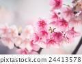 花朵 花卉 花 24413578