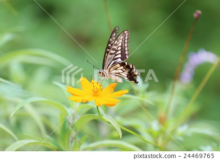 花和蝴蝶 24469765
