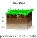 Soil Profile 24501466