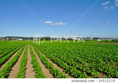Zama Sunflower Field附近的照片 24512119