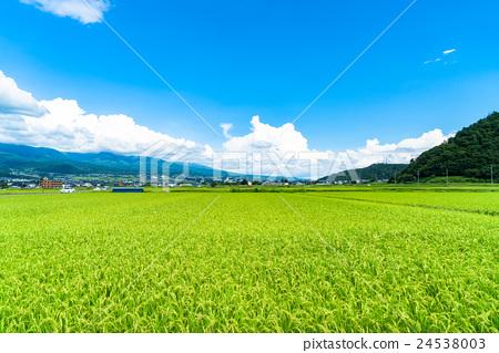 [長野縣]鄉村景觀和夏日的天空 24538003