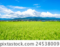 summer weather, scenic, scenery 24538009