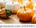 pumpkin, plenty, crop 24564841