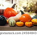 pumpkin, many types, variety 24564843