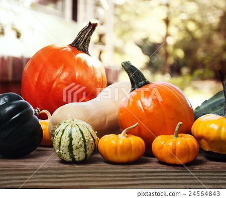 pumpkin, variety, many types 24564843