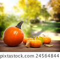 pumpkin, green, verdure 24564844