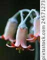 植物 植物学 植物的 24571273