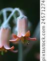 花朵 花卉 花 24571274