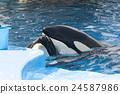 동물, 해양 동물, 해양 생물 24587986
