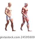 男性解剖学肌肉3DCG例证材料 24595609