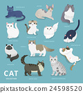 Adorable cat breeds collection 24598520