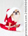 動物 小狗 狗狗 24600464