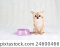 狗狗 動物 小狗 24600466