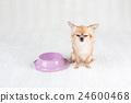 狗狗 動物 小狗 24600468