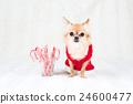 动物 小狗 狗狗 24600477