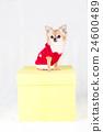 狗 動物 小狗 24600489