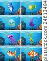 set, sea, animals 24613494
