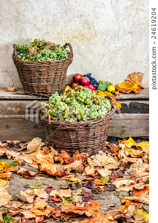 autumnal still life with fruit on a wooden base 24619204