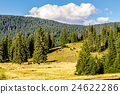 forest, mountain, coniferous 24622286