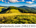 meadow, forest, landscape 24622303