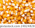 Corn for popcorn background 24624828