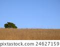 desolate field, field, wood 24627159