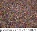 Drying coffee beans 24628074