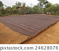 Drying coffee beans 24628076