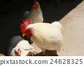 雞 24628325