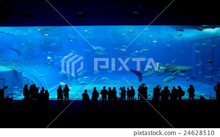 Aquarium in okinawa 24628510