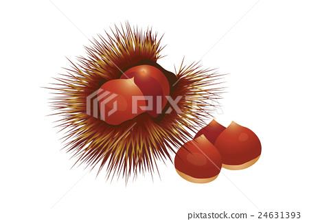 Chestnut 24631393