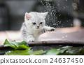 kitten shakes the water off its leg 24637450