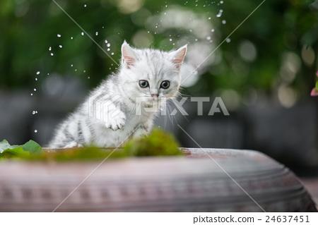 kitten shakes the water off its leg 24637451