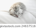 Cute tabby kittens lying 24637516
