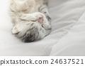 สัตว์,สัตว์ต่างๆ,แมว 24637521