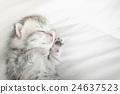 สัตว์,สัตว์ต่างๆ,แมว 24637523