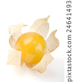 Physalis single berry over white 24641493