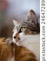一只猫的轮廓 24647289
